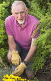 Old man kneeling in flower bed Stock Photos