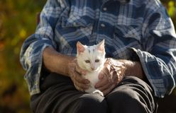 Old man with little cat in lap. Senior man holding cute white little cat in lap in garden. Animal therapy to old people Royalty Free Stock Images