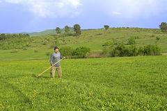 Old man mowing grass on the field Royalty Free Stock Images