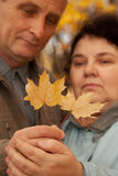 Old man and old woman hold maple leaves on hands Stock Photo