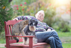 Old man with pets in the park. Senior man sitting on the bench in the park with his pets, tabby cat and miniature schnauzer Royalty Free Stock Photos