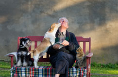 Old man with pets. Senior man with dogs and cat on his lap on bench Stock Photography