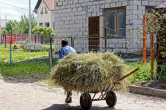 The old man is pulling a cart with dry hay down the street Royalty Free Stock Photography