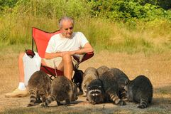 Old man and the raccoons Stock Image