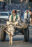 Old man riding donkey cart Stock Images