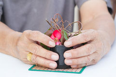 The old man's hand and cup of growing tree Environment concept Stock Photo