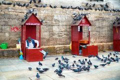The old man sells wheat grain to feed the pigeons near New Mosque. Istanbul stock image