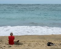 An old man sitting on the beach sand while looking out at the sea accompanied by a black-and-white dog sleeping not far from where royalty free stock photo