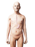 Old man - stomach Stock Photography