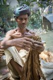 An old man Tobacco worker processing bunch of tobaccos in Dhaka, manikganj, Bangladesh. royalty free stock photo
