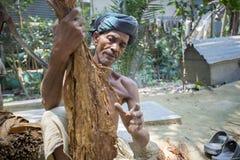 An old man Tobacco worker processing bunch of tobaccos in Dhaka, manikganj, Bangladesh. royalty free stock photos
