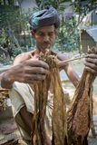 An old man Tobacco worker processing bunch of tobaccos in Dhaka, manikganj, Bangladesh. royalty free stock image