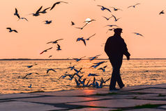 Old man walking alone near the seashore at sunset, Seagulls flying on the sea. Royalty Free Stock Photography