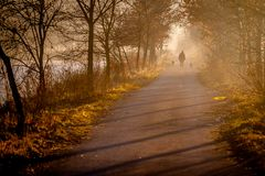 Old Man Walking with Dogs royalty free stock photography