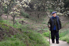 Lonely left-behind old man. An old man walking forward with his crutch on the country lanes.  China Royalty Free Stock Photo
