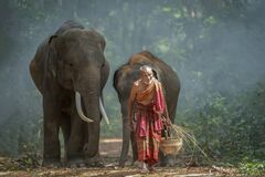 The old man was walking out of the forest with the elephant he raised