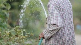 Old man watering plants with water from rubber tube, mute, without sound. stock footage