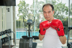 Old man wearing red boxing gloves exercising in fitness or gym,. Look to camera ready to fighting, copy space for text Royalty Free Stock Photography