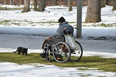 Old man in wheelchair with his cat. Outdoor in winter Stock Photo
