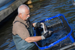 Old man working in fish-farm Stock Photo
