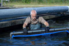 Old man working at fish-farm Stock Photo