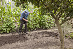 Old man working in vegetable garden Royalty Free Stock Photos