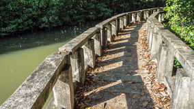 Old mangrove walkpath. Stock Photography
