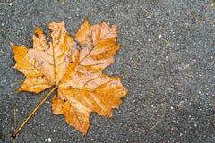 Old maple leaf on asphalt Stock Photography