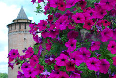 Old Marinkina tower seen through flowers. Kremlin in Kolomna, Russia. Stock Images