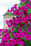Old Marinkina tower seen through flowers. Kremlin in Kolomna, Russia. Royalty Free Stock Image