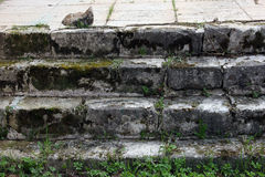 Old medieval grey stone steps of the orthodox church covered wit Stock Photography