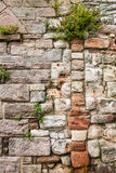 Old medieval wall covered with plants Royalty Free Stock Photography