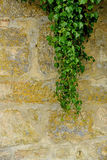 Old,medieval wall with ivory Stock Image