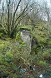 Old menhir with forest landscapes Scotland. Probably menhir residues in the forest. Somewhere in Scotland royalty free stock images