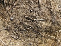 Old and messy hay (straw) background Royalty Free Stock Images