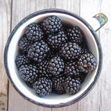 Old Metal Cup Full of Fresh Sweet Blackberries. Squared Stock Photography