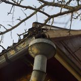 Old metal downspout. On the corner of old house, outdoor close-up stock photography