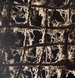 Old metal grill in the web. Photo of an abstract texture Stock Photography