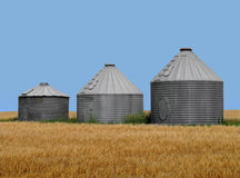 Old metal prairie grain bins in wheat field. Three old metal American prairie bins for holding grain, in a wheat field against a blue sky Royalty Free Stock Image