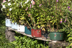 Old metal saucepans as flowerpots. Old battered metal saucepans as flowerpots in village yard Royalty Free Stock Photo