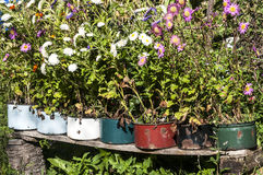 Old metal saucepans as flowerpots. Old battered metal saucepans as flowerpots in village yard Royalty Free Stock Image