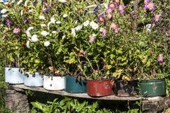 Old metal saucepans as flowerpots Royalty Free Stock Image