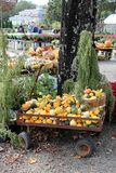 Old metal wagon filled with squash and pumpkins, with shoppers in the background at local nursery, Connecticut, 2018. Vertical image of old, rusty wagon filled royalty free stock photography