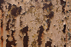 Old metal wall colored in brown. Royalty Free Stock Image