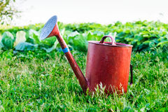 Old metal watering can garden on the bright green grass. Royalty Free Stock Image