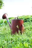 Old metal watering can garden on the bright green grass. Stock Images
