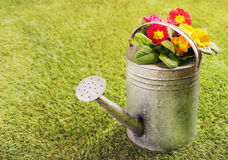 Old metal watering can on grass Royalty Free Stock Images