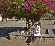 Old mexican man with bougainvillea tree Stock Image