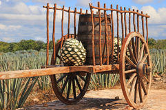 Old mexican trailer. In front of blue agave plantation Royalty Free Stock Image
