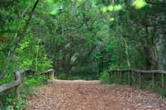 Old Military Road. The old military road leading from Fort Clinch, Fort Clinch State Park, Florida Stock Photo